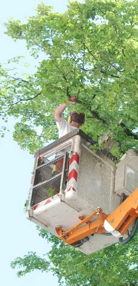 wheatfield Tree Service